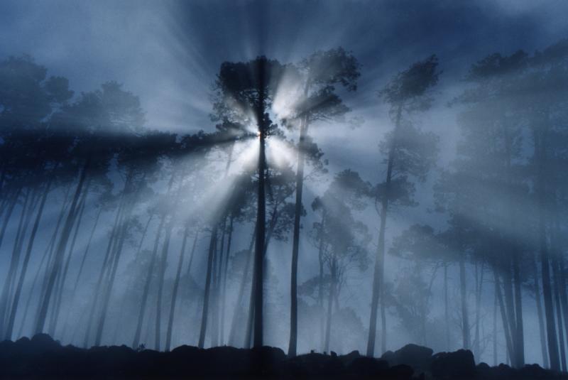 Fog trees rays