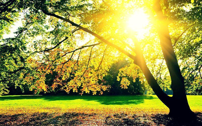 Sunrise in garden