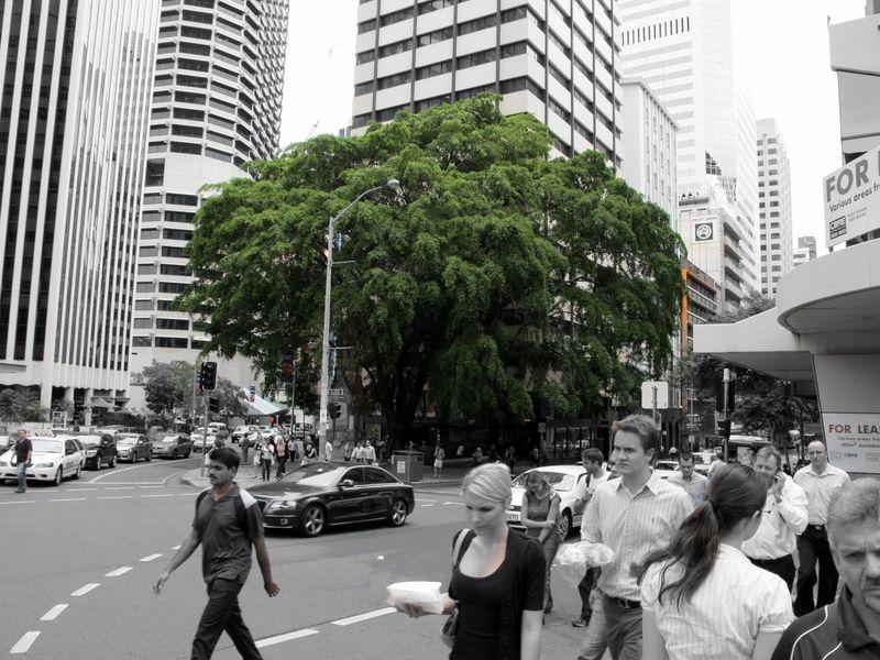 City_tree