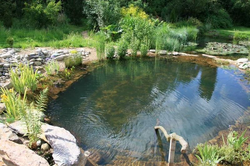Pool in nature