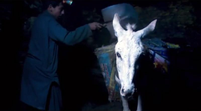 Brooke-donkey-pakistan-mine